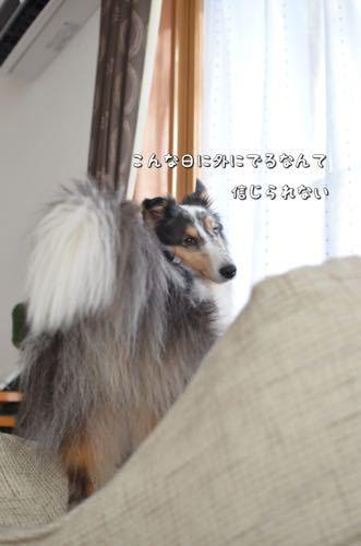 IMG_4028.jpg