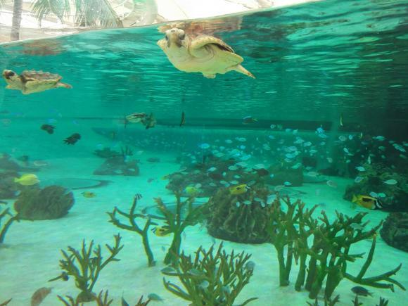 鴨川シーワールド 海の写真 カメ