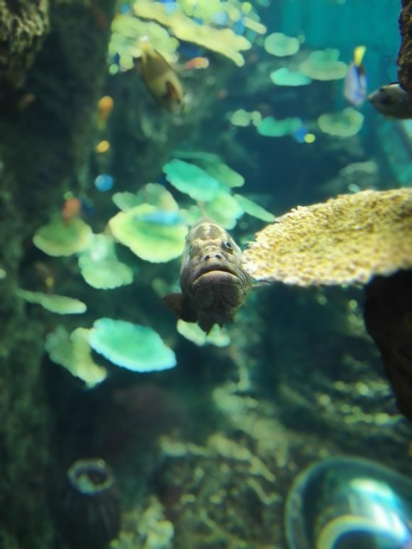 鴨川シーワールド 海の写真 クエ