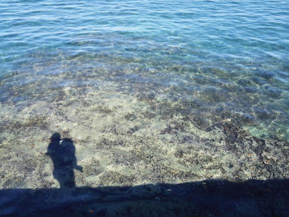 鴨川釣行 海の画像 赤ちゃん 家族