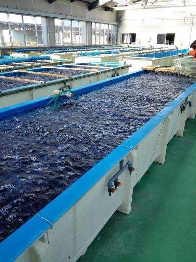 茨城県栽培漁業センターの見学