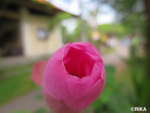 lotus3-07/01/17
