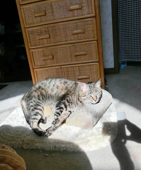 Sunbathing-non1.jpg