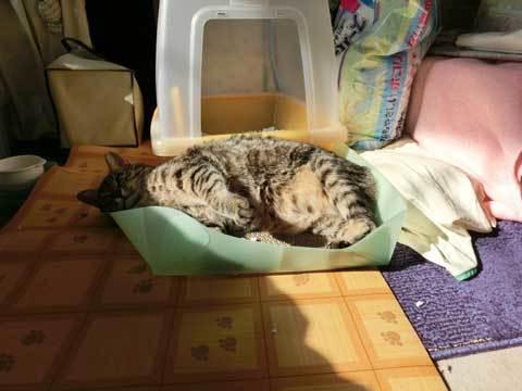 Sunbathing-non55.jpg