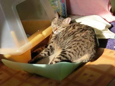 Sunbathing-non59.jpg