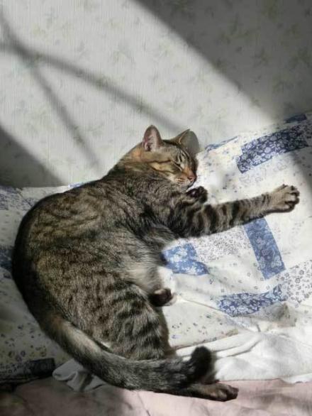 Sunbathing-rin3.jpg