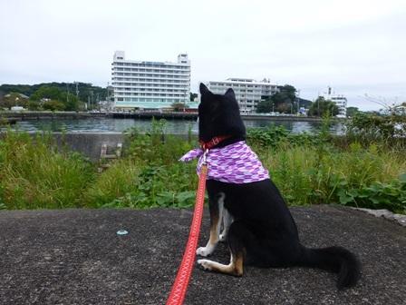 ホテル川久朝のお散歩3