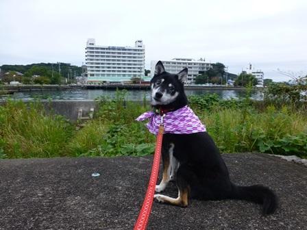 ホテル川久朝のお散歩4