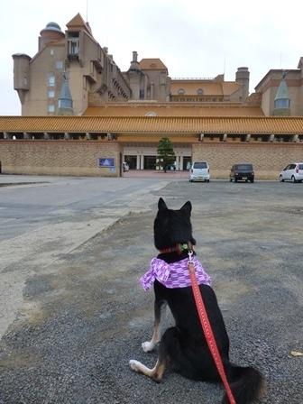 ホテル川久朝のお散歩8