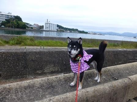 ホテル川久朝のお散歩9