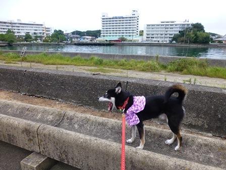 ホテル川久朝のお散歩10