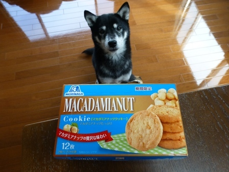 期間限定マカダミアナッツクッキー (1)