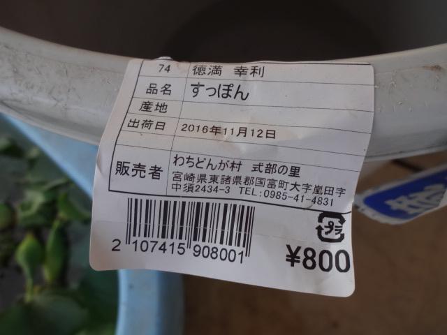 H281113 (136)