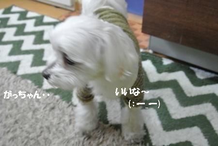 DSC_1594 (450x301)