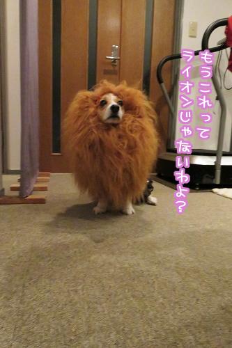 ライオンじゃないわよ?