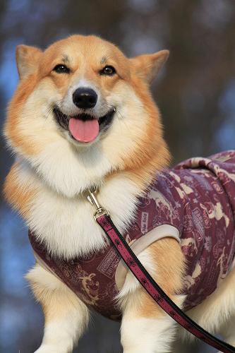 れんたんは紫☆