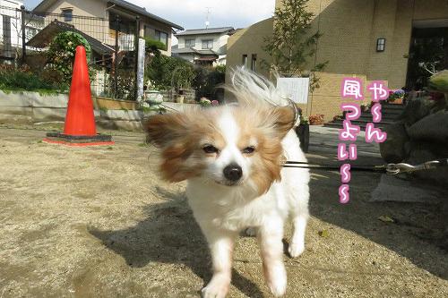 風つよい~
