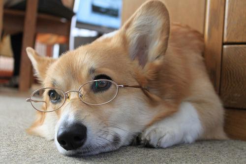 シンプルなメガネ