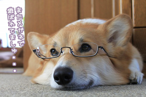 またメガネで