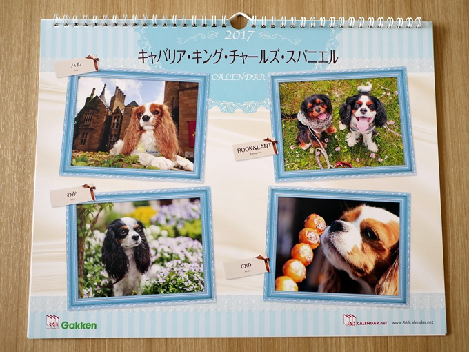blogP1000083.jpg