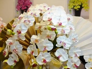 170127お花の展示会02(320x240)