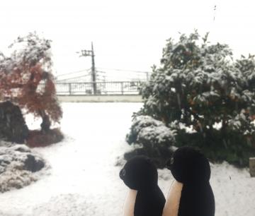 20161124-snow (3)-加工