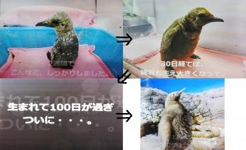 20170120-海遊館 (11 12 13 14)