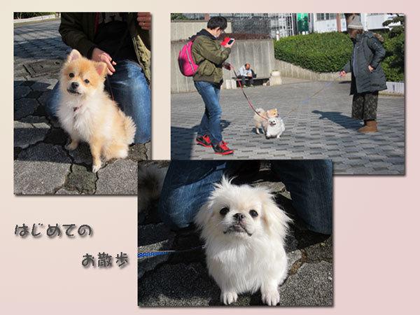 wanko-3.jpg