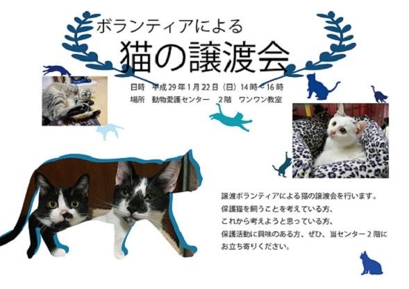 猫の譲渡会1