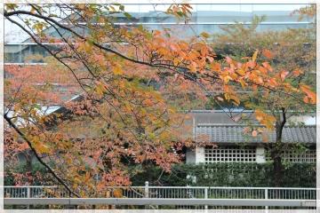 H28111404目黒川