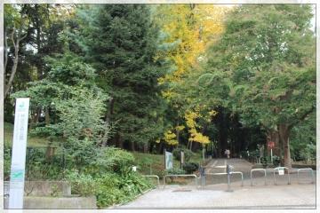 H28111410林試の森