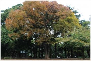 H28111411林試の森