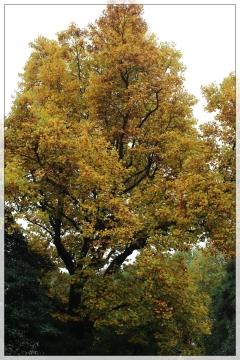 H28111412林試の森