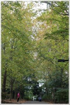 H28111413林試の森