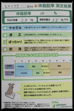 H28120406ジョイフル本田