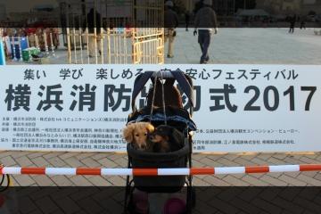 H29010735横浜散歩