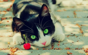 Nature_cats_animals_cherries_green_eyes_feline_pets_1920x1200.jpg