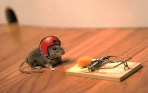 animals_helmets_mouse_trap_mice_1920x1200.jpg