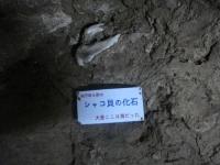 s-DSC07989.jpg