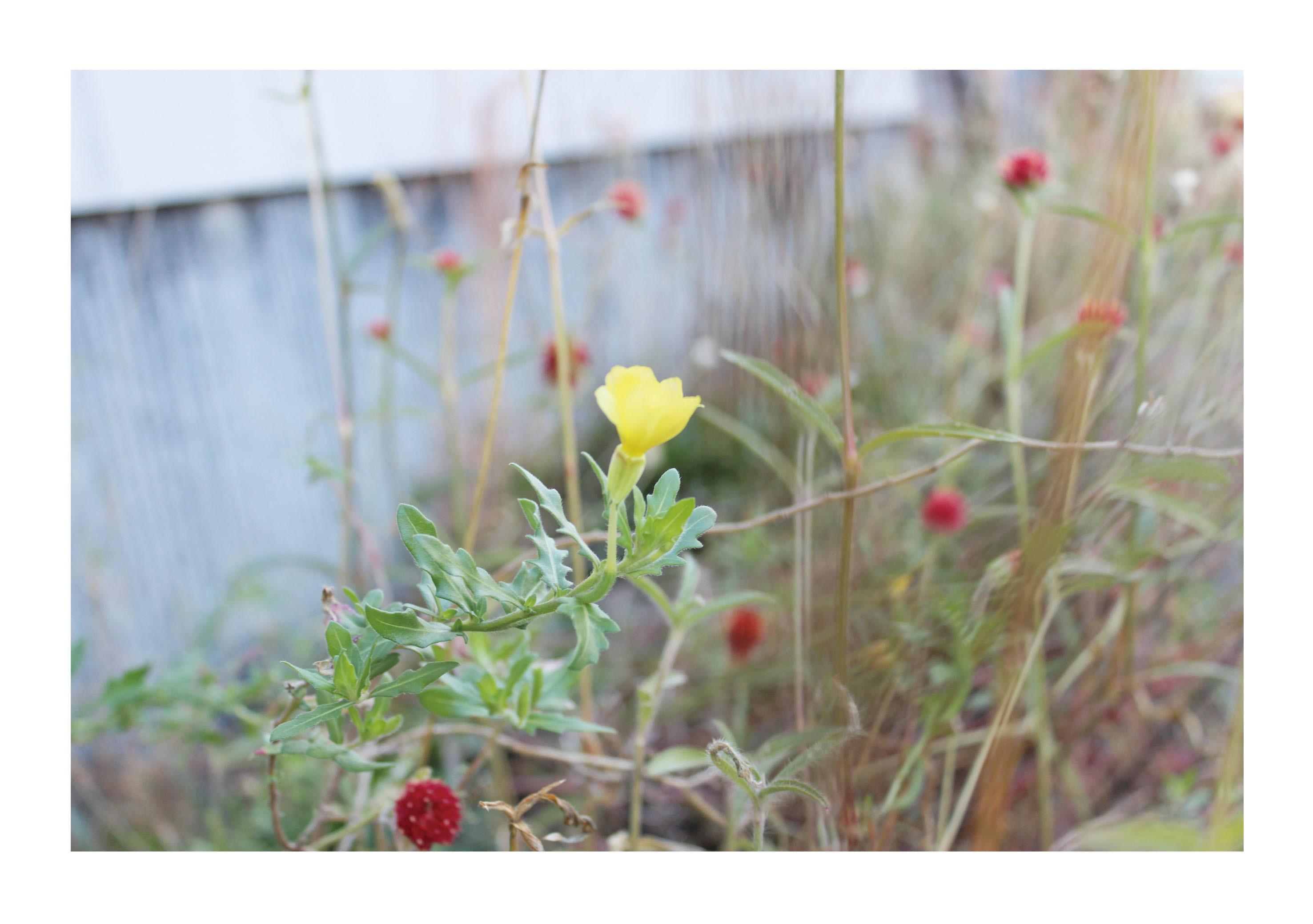 路地に咲く花1