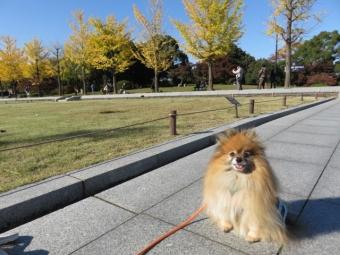 昭和記念公園 136