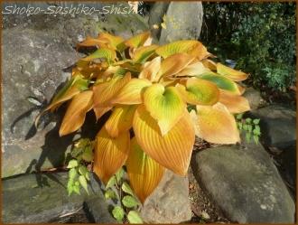 20161205  黄色い葉  1   晩秋の花と実
