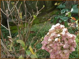 20161205  紫陽花  2   晩秋の花と実