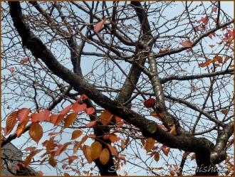 20161205  木  1   晩秋の花と実
