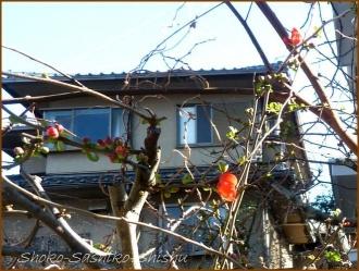 20170131  花  5   暖かな日