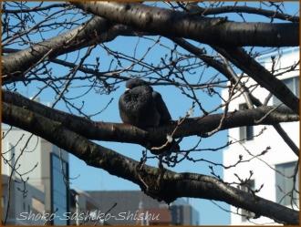 20170131  鳩  2   暖かな日