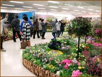 20170205  入口  3   花の展覧会