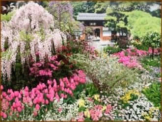 20170205  入口  4   花の展覧会