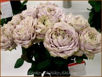 20170208  バラ  3   花の展覧会