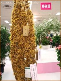 20170208  枝もの  1   花の展覧会